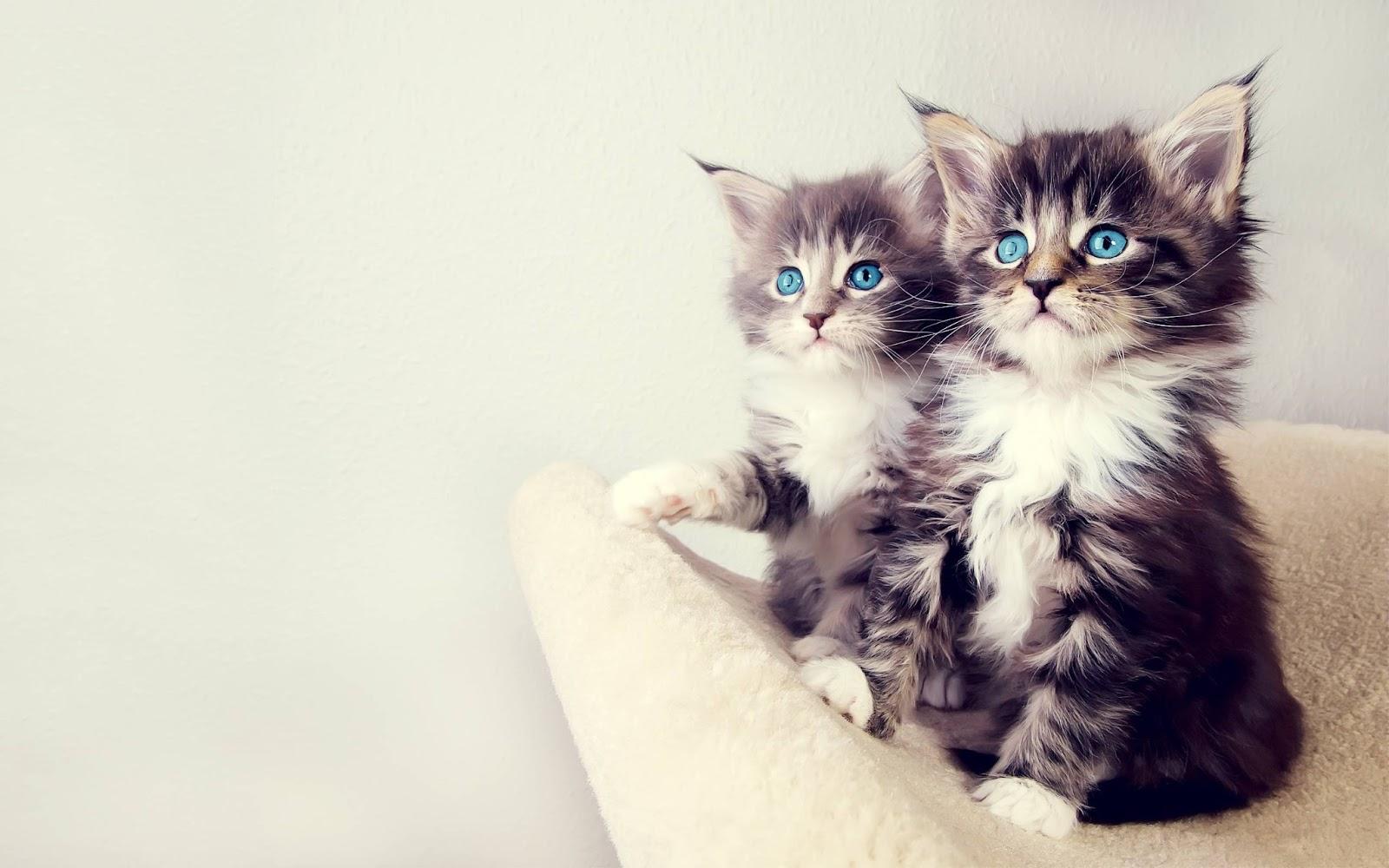 http://1.bp.blogspot.com/-RcK1OiebucU/UTewYY97oWI/AAAAAAAAG1U/5lqjkS36PeU/s1600/Two-little-cats-the-most-beautiful-eyes.jpg