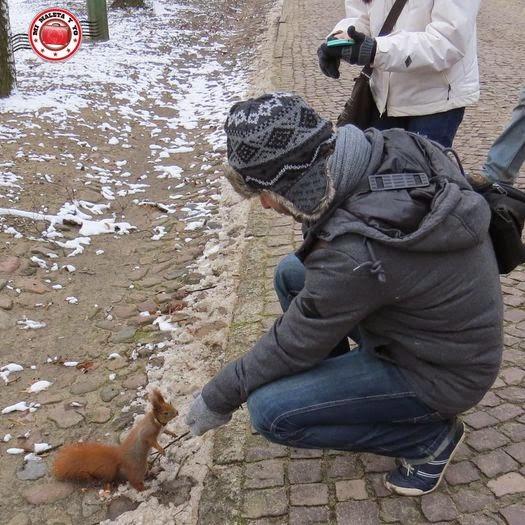 MolaViajar en con las ardillas del Parque Lazienki o de Chopin, Varsovia