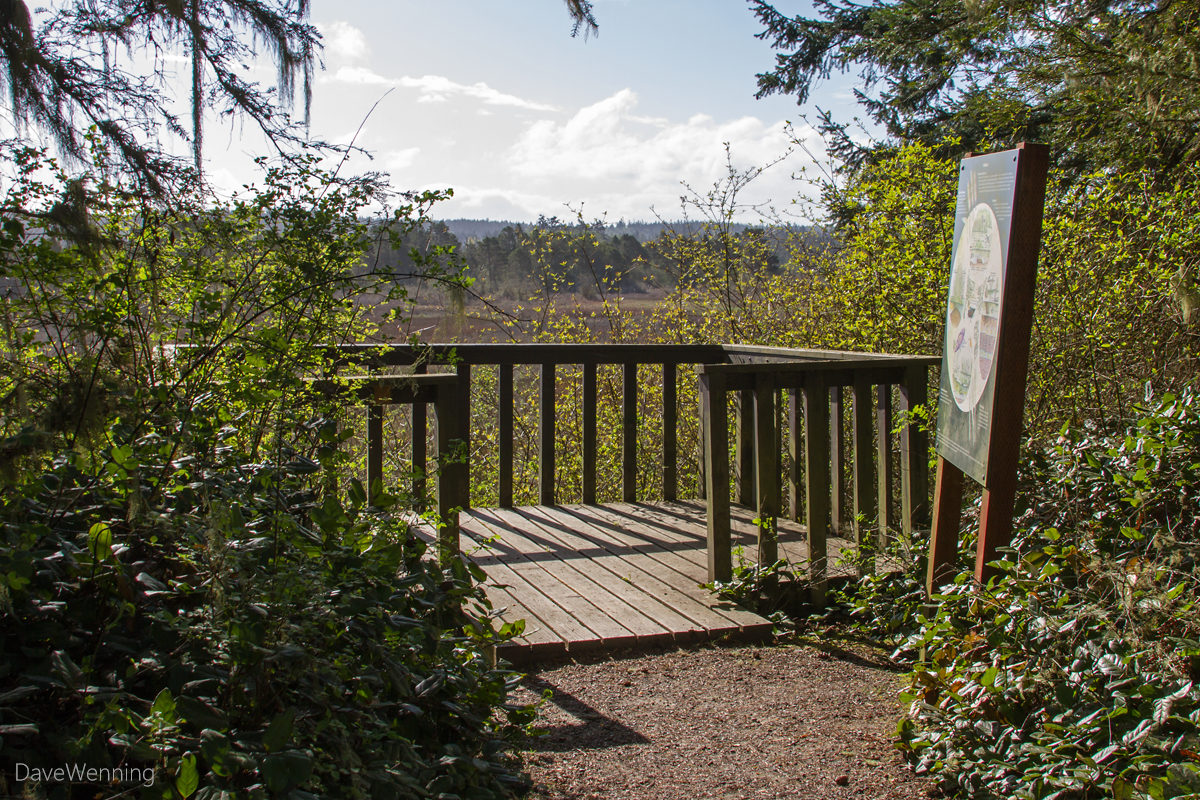 Wetland Overlook, Sand Dune Trail, Deception Pass State Park