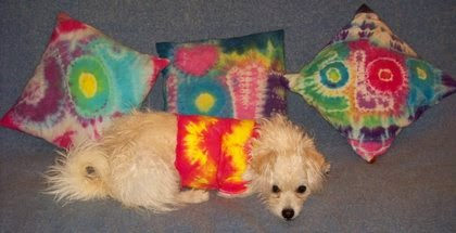 White dog in tie-dyed t-shirt with three small tie-dyed pillows