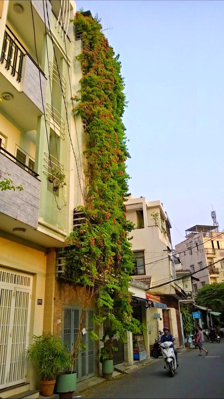 trồng cây xanh chống nắng cho nhà phố