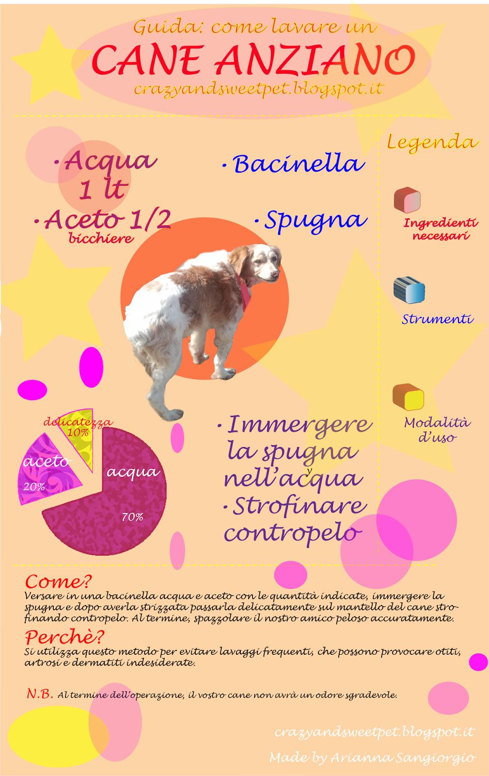 infografica cane anziano
