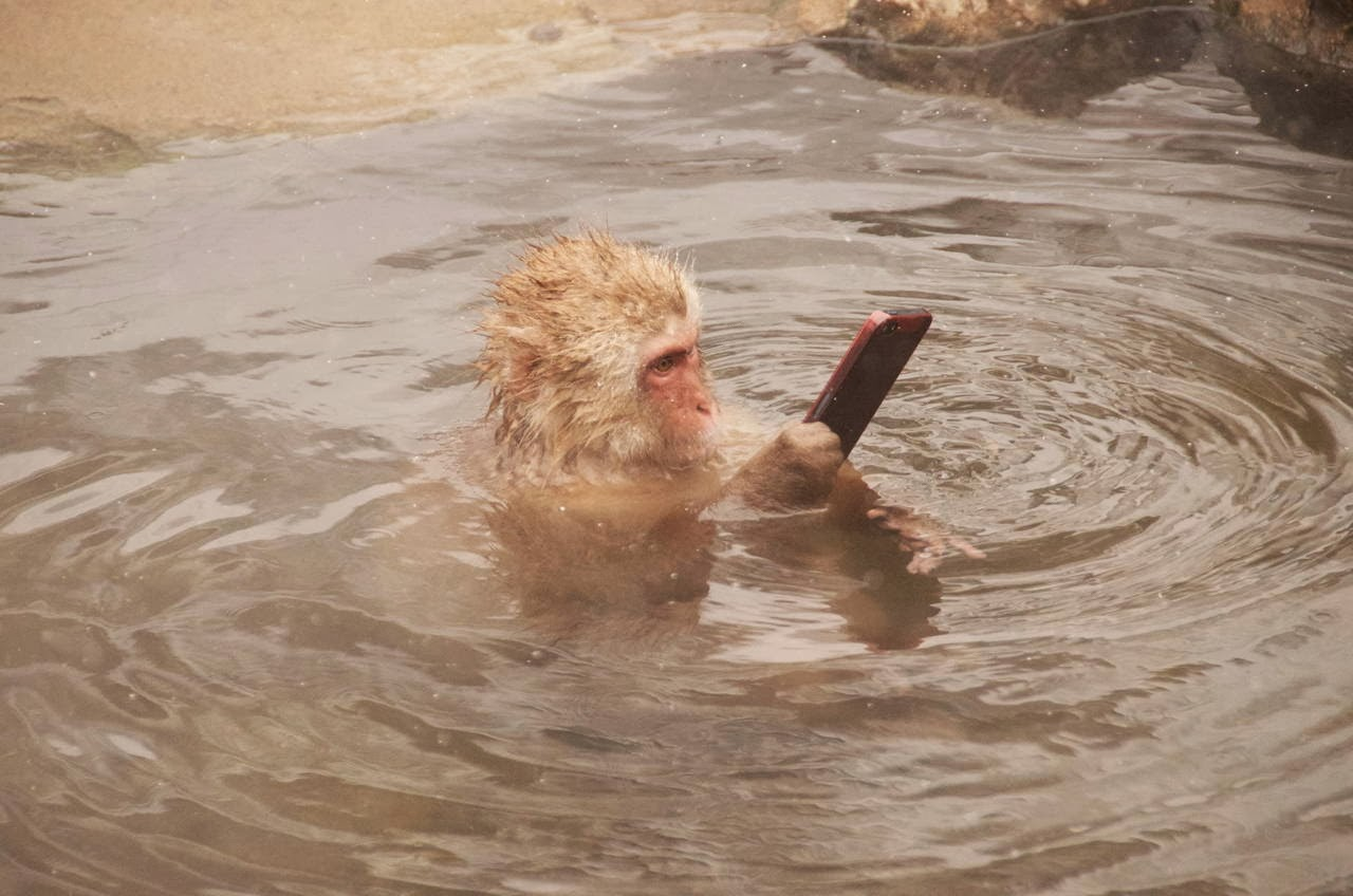 Funny animals of the week - 7 February 2014 (40 pics), monkey holds a phone while submerging in water