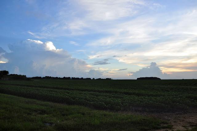 Soybeans Deerbrook RD Noxubee County MS