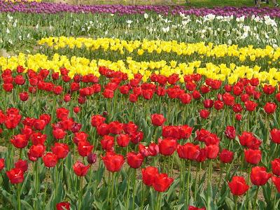 万博記念公園・自然文化園 チューリップの花園