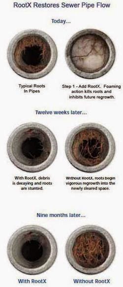 how to clear tree roots from sewer line