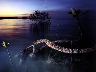 Rattle Snakes Wallpapers