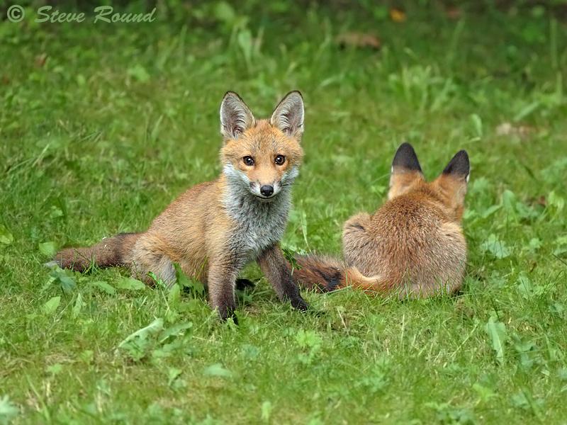 mammal, wildlife