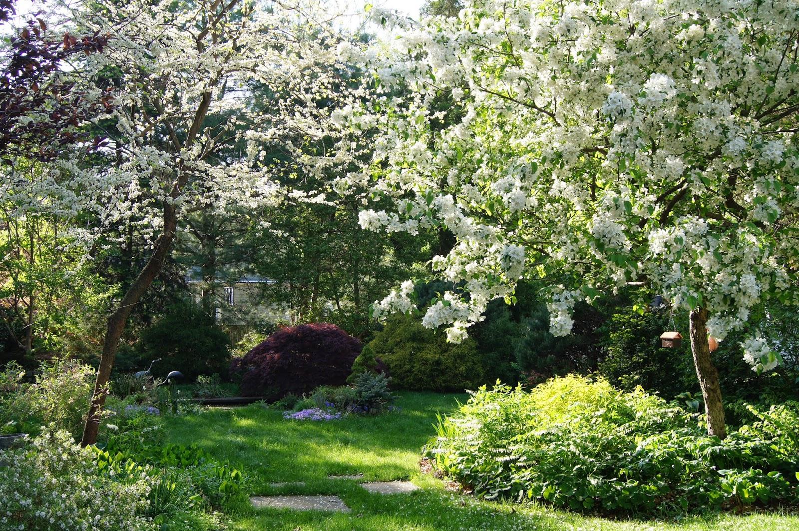 The Sustainable-Enough Garden: My journey toward sustainable gardening