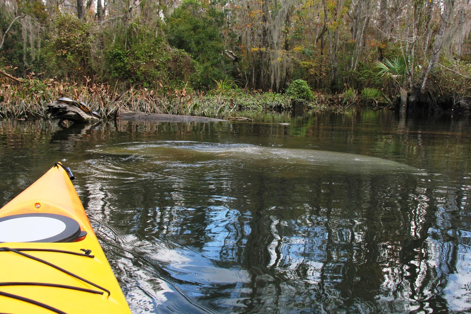 Views From Our Kayak Wakulla River