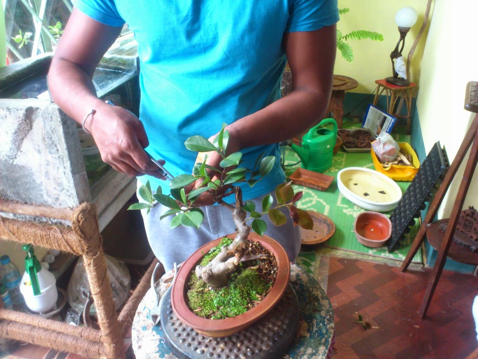 Bonsai Mauritius June 2014