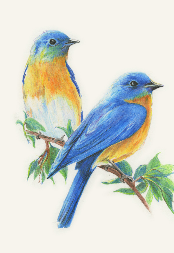 Diane Wright Art Journal: Colored Pencil  Birds