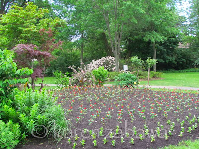 Dozens of new bedding plants in annual garden bed at Brueckner Rhododendron Gardens in Mississauga, Ontario.