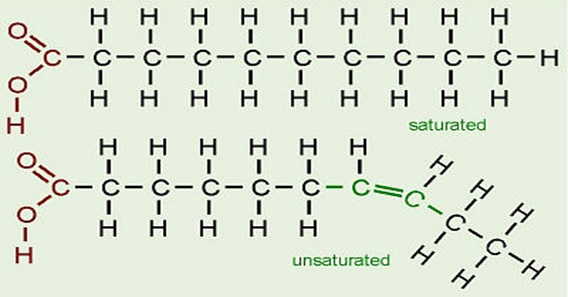 Unsaturated Fat Molecule 18
