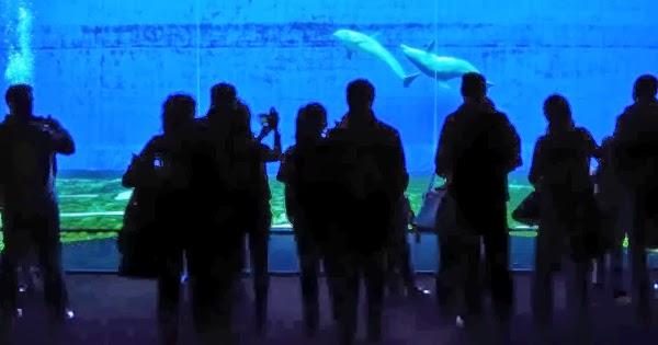 Quali sono gli acquari pi grandi e belli d italia il for Quali sono i rettili