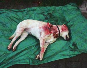 Animalismo o traffici di animali animalismo o mafia for Cani da tenere in casa