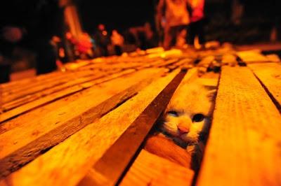 kucing diselamatkan