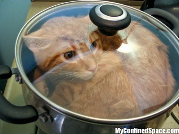 cats are liquids 1