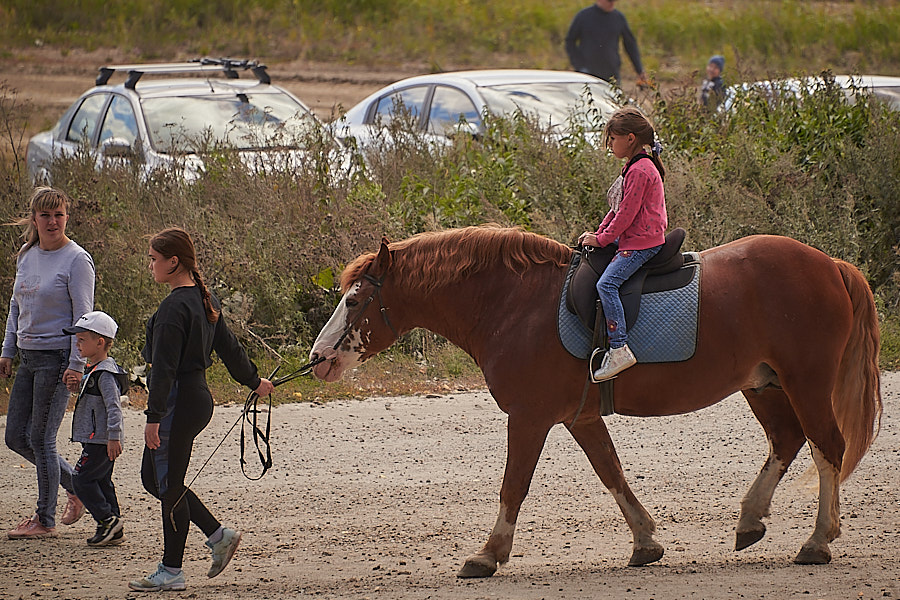 Традиционный осенний цирк с конями