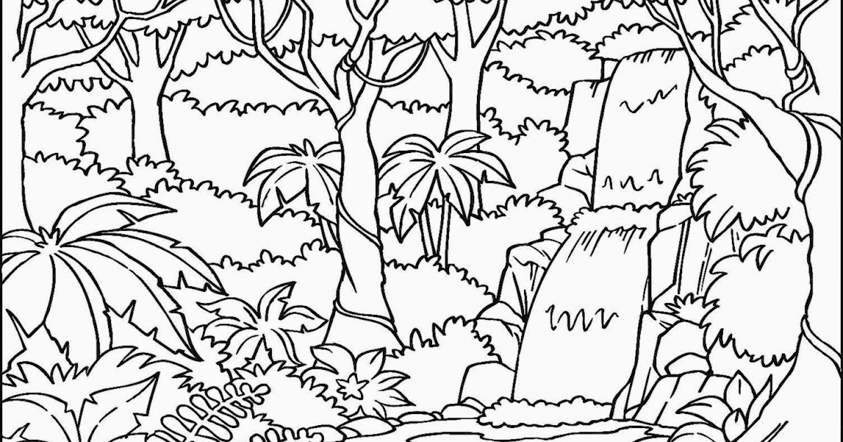 rainforest coloring sheets free coloring sheet