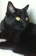 Gato preto é fofo!