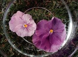 Como se preparan las flores de bach vida alterna for Como se cocinan las setas