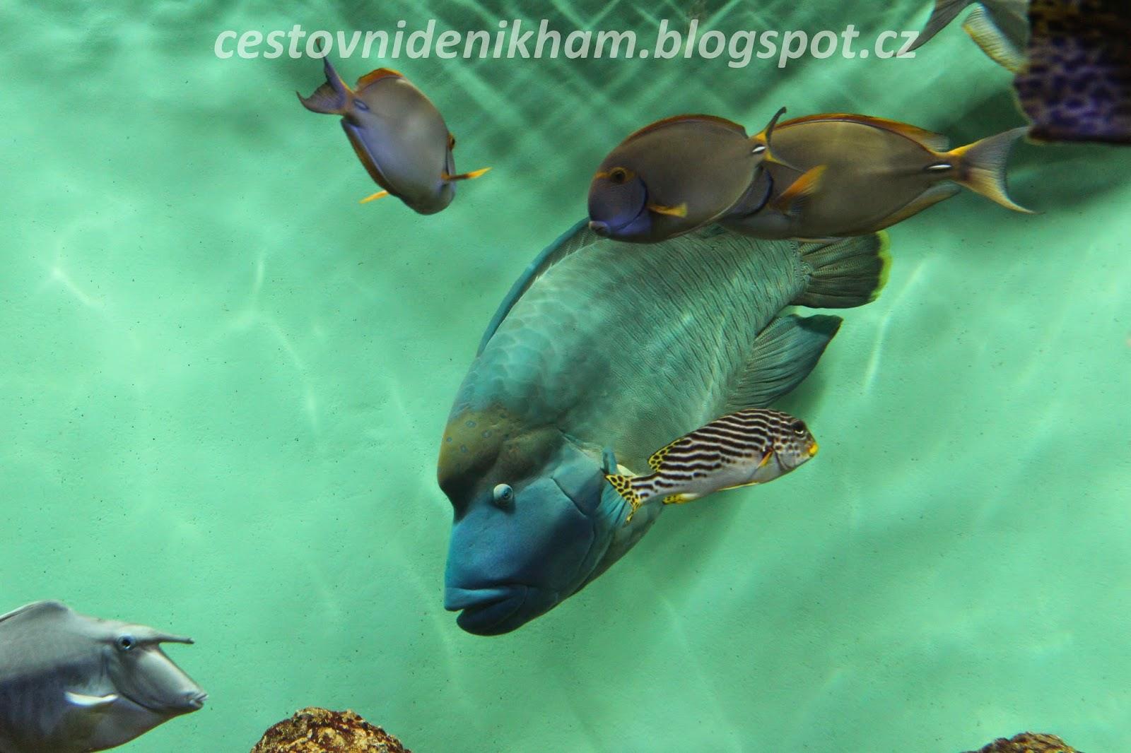 okyo Sea Life Park