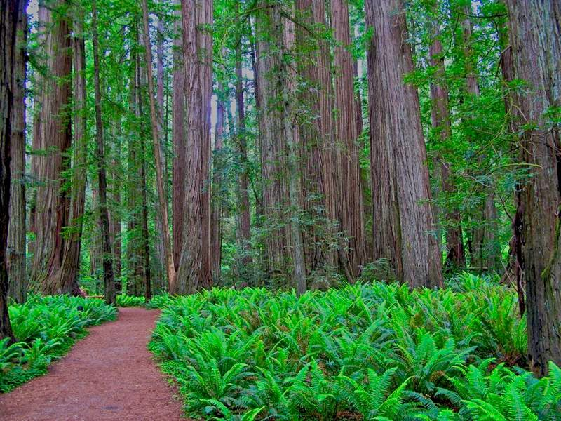 The Grove of Titans and Gaint Redwoods Tree, California