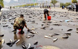Five TONS of catfish bring traffic to a halt in China