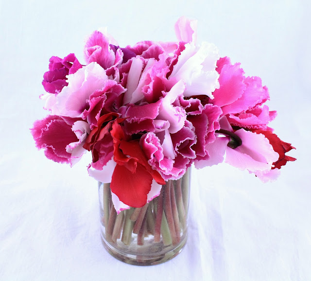 vase of cyclamen flowers via Periwinkle Flowers