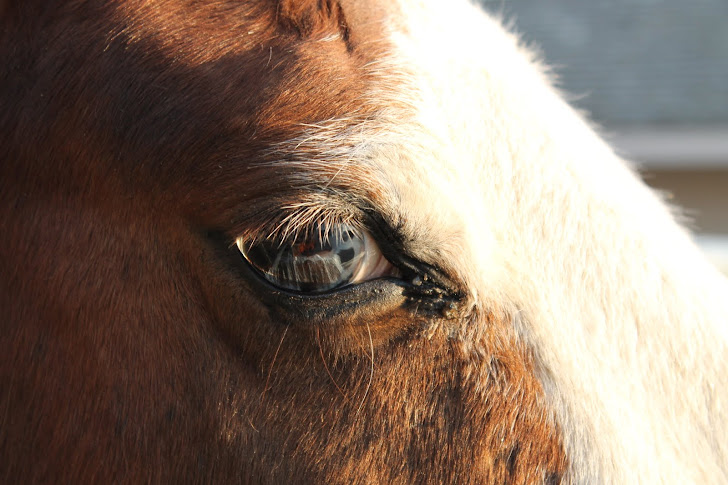 Blue eyed pony