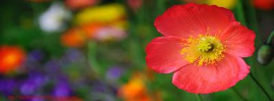 Couverture facebook fleur