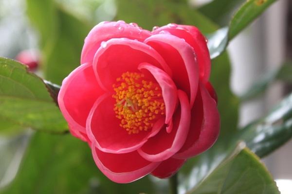 blog hoa hai duong,  y nghia hoa hai duong , hoa hai duong vang,  anh hoa hai duong,  van hoa hai duong,  hoa hai duong voan.  hoa hai duong photos,  y nghia cua hoa hai duong