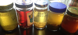 A selection of vodkas steeping in assorted jars. Here: Dill, cinnamon, chamomile, mint, oregano