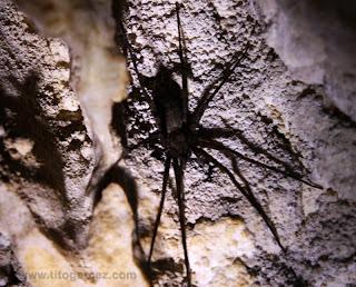 Aranha de porte médio vista na gruta da Lapinha, em Minas Gerais
