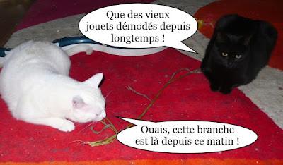 Chat blanc et chatte noire.