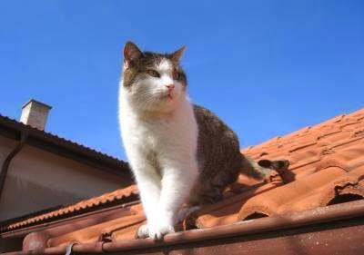 ¿Porqué el Gato es tan Independientes?