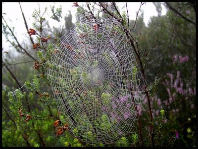 http://1.bp.blogspot.com/-RiN95m_S9HA/TqTwGRc9qtI/AAAAAAAAA-8/gPi-5QGivoY/s400/tela-de-arana.jpg