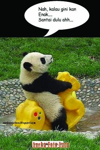 Panda Lagi Naik Kuda