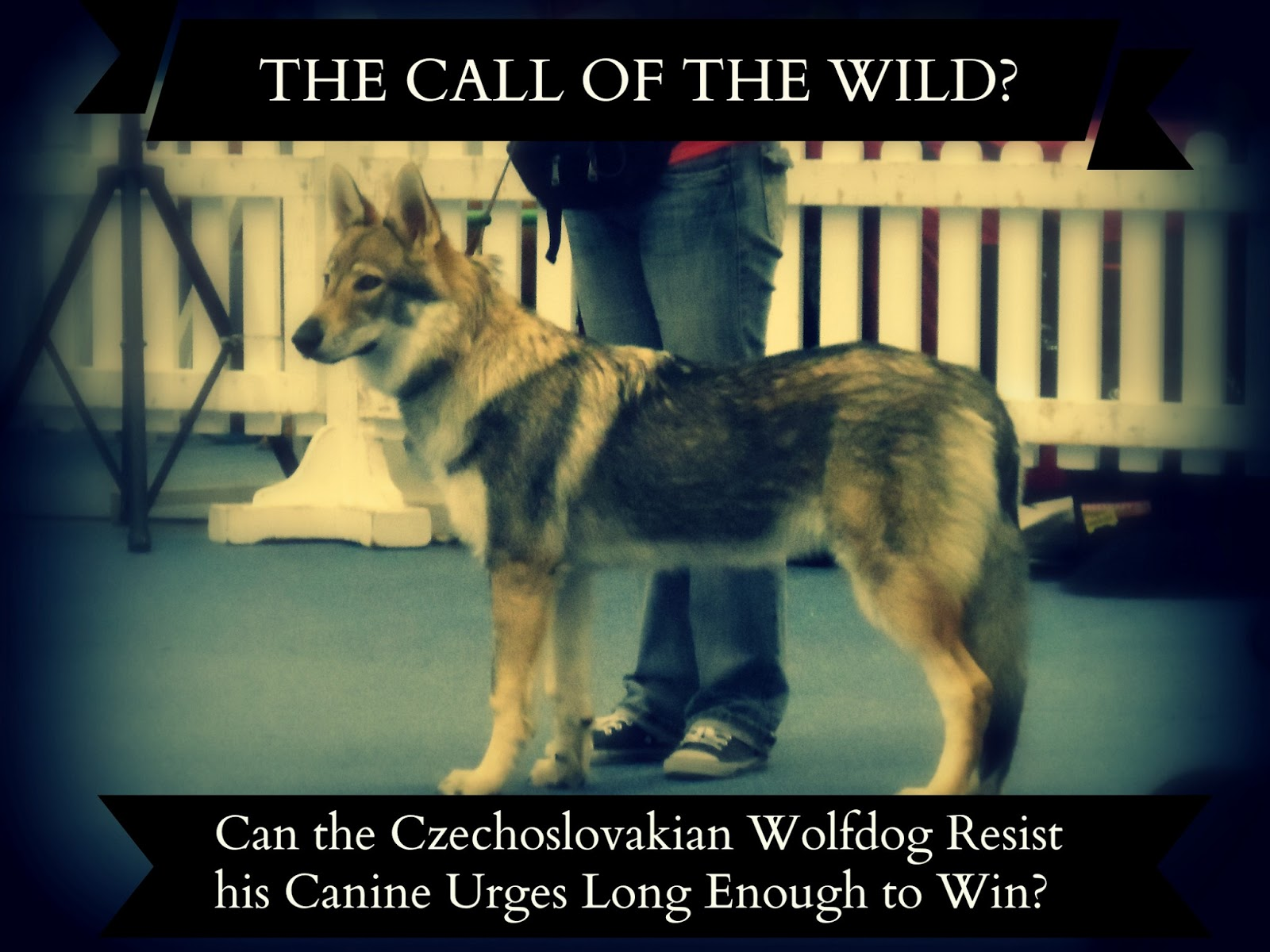 the call of the wild' by Download the app and start listening to the call of the wild (adaptation) today -  free with a 30 day trial keep your audiobook forever, even if you cancel.