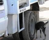 Bautizan recolector basura en Isla Arena. 3enero2013.