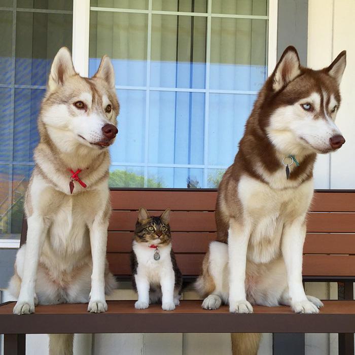 How Big Of A Dog Door For Husky