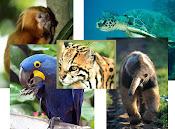 Animais em Extinção.