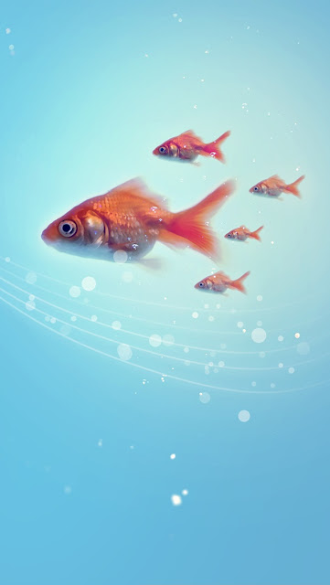 high definition water and fishes picture for iphone 5