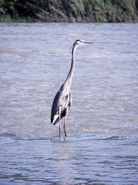 Dam Bird Photograph