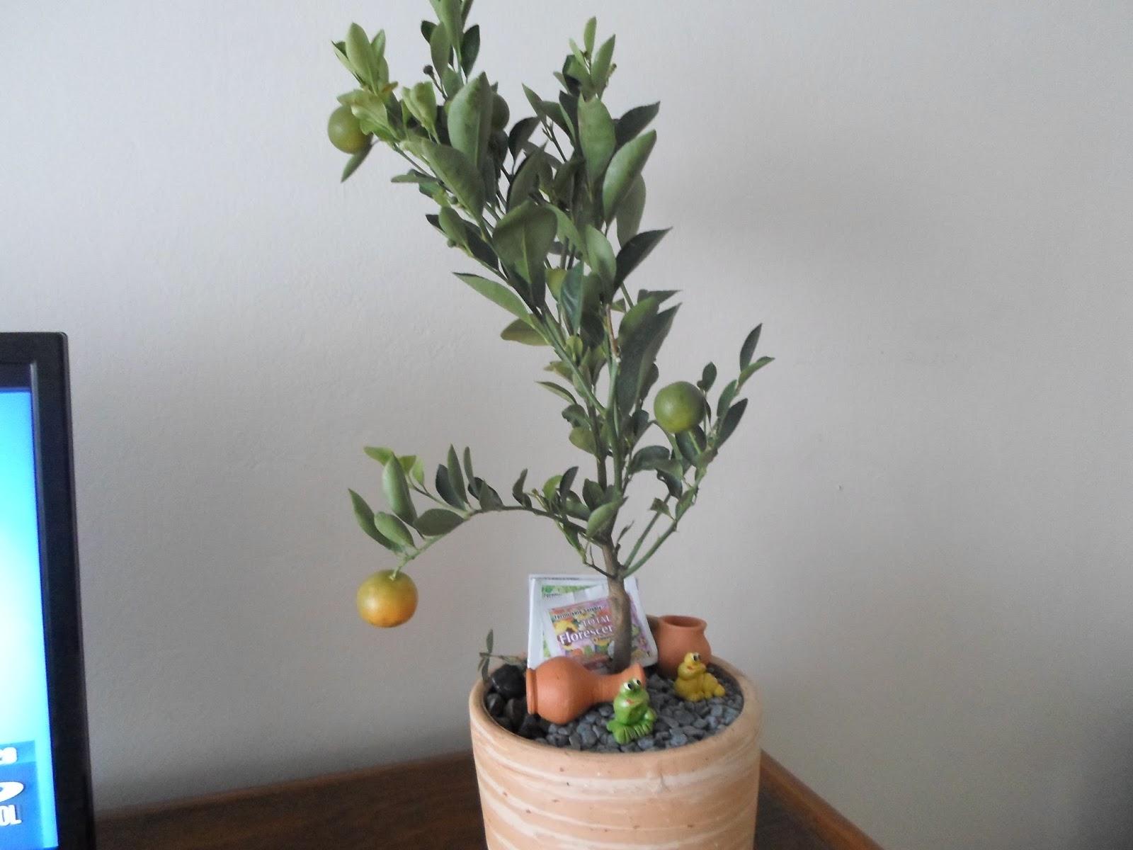 Terrarios y bonsais de la tierra para ti bonsai de - Tierra para bonsais ...
