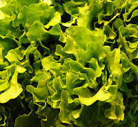 the link between employee engagement and lettuce