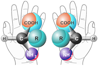 Analogy of homochiral chemicals with hands