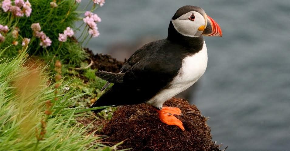 Ornitologia azpitaldea / Klikatu hemen