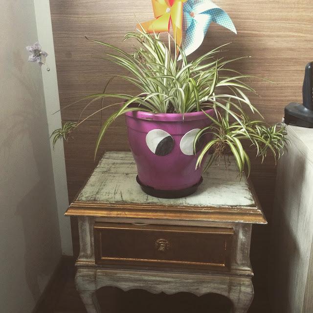 Planta aranha